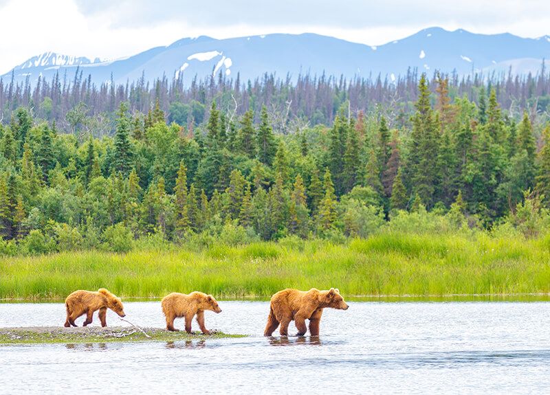travel tips Katmai National Park, Alaska